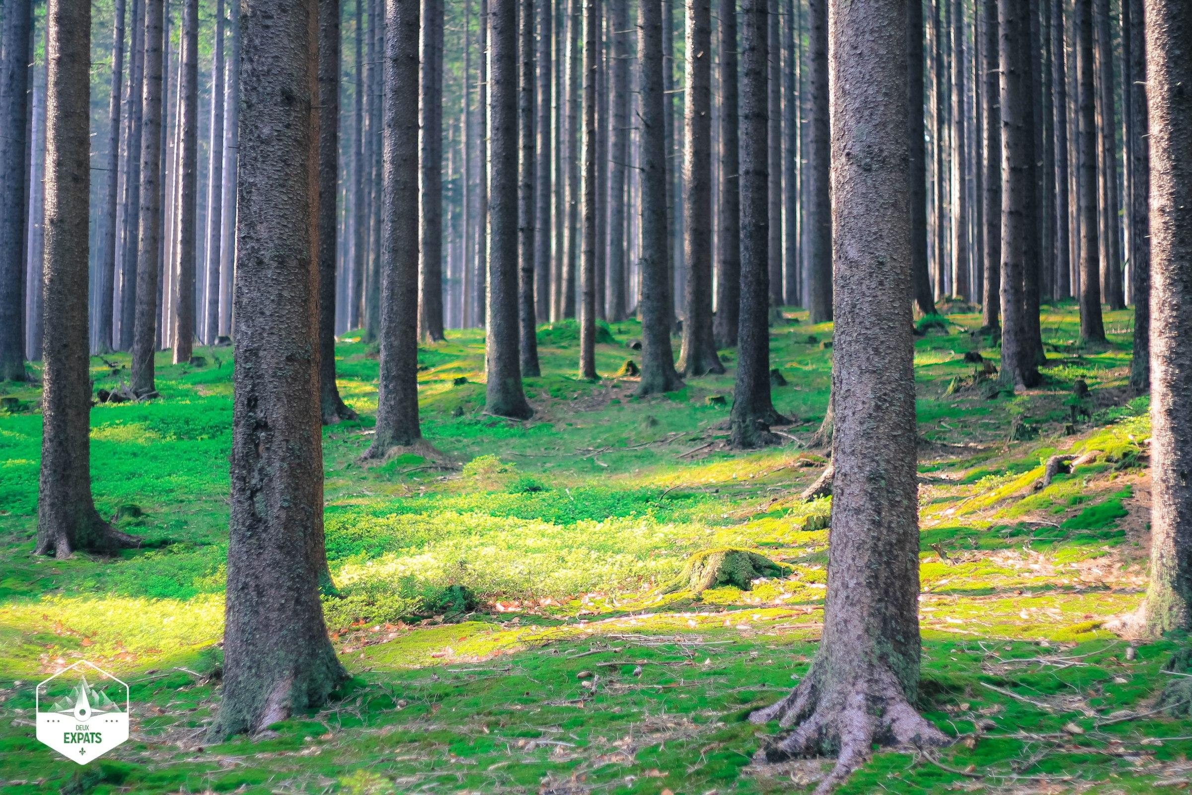 Randonnée au Parc national de Sumava en République tchèque