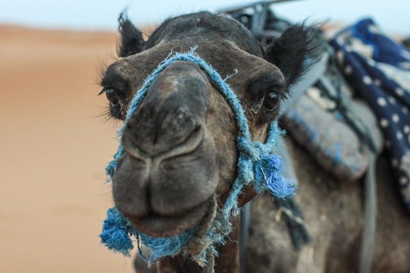 Voyage dans le désert au Maroc